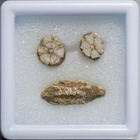 桜石 セット 001