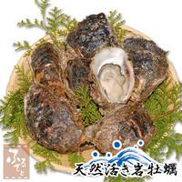 6月出荷開始 天然活き岩牡蠣 特大 10~15個 約4kg 大分県産 牡蠣 カキ かき
