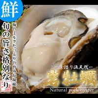 6月出荷開始 天然活き岩牡蠣 特大 4~7個 約2kg 大分県産 牡蠣 カキ かき