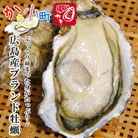かき小町 特大 2L 20個 加熱用 広島 殻付き生カキ 牡蠣 殻付き カキフライ かき カキ 牡蛎 取り寄せ
