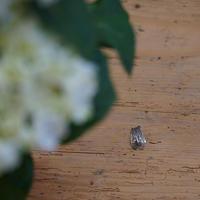 天野ミサ ツクツクボウシのブローチ