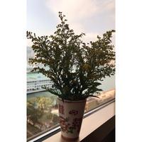 【香港☆G.O.D.】Double Happiness・囍  / 手書きのタンブラー・花瓶でもOK