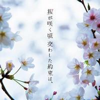 空下慎第1回監督作品 短編映画「桜が咲く頃 交わした約束は、」