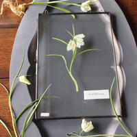≪fp-52-1≫[透ける植物標本/フリチラリアWH]30x20