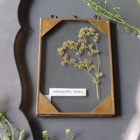 ≪fp-49≫[透ける植物標本/アルケミラモリス]18x12.5