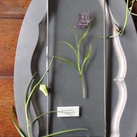 ≪fp-52-2≫[透ける植物標本/フリチラリアPU]40x15