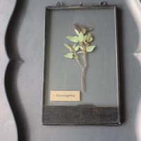 ≪fp-43≫[透ける植物標本/ユーカリボール]21x12.5