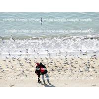 海辺のカップルとカモメ   デジタル写真データ digital photo data