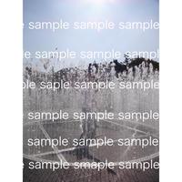 デジタル写真データ Digital photo data  オランダの地上の噴水2015 『Hide & Seek』fountain designed by Jepp Hein