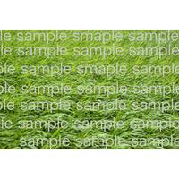 緑の草原   Green field   デジタル写真データ digital photo data