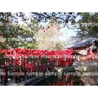 赤い鳥居  Red Torii gates  デジタル写真データ  digital photo data