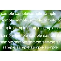 緑の葉 イメージ写真  デジタル写真データ digital photo data