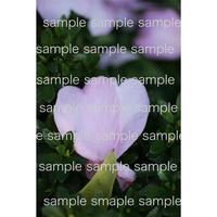 双子のピンクのハートの花びら   pink twin petals  デジタル写真データ digital photo data