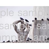 アムステルダムの銅像と鳩  デジタル写真データ digital photo data
