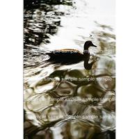 漂う鳥のシルエット デジタル写真データ digital photo data