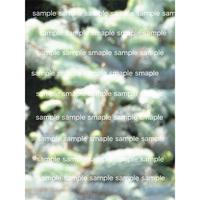 緑のイメージ写真 壁紙  木々  デジタル写真データ digital photo data