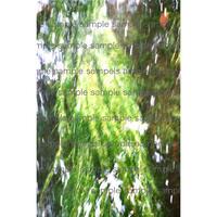 水面に揺れる緑の藻   Green Algae デジタル写真データ  digital photo data