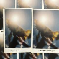 ひまわりと太陽のポストカード 8枚