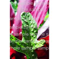 緑の葉っぱ  Green leaf  デジタル写真データ  digital photo data