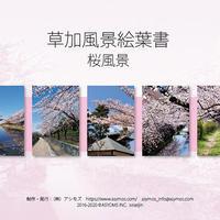 草加風景絵葉書 桜風景