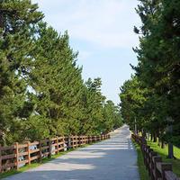 草加松原遊歩道イメージ