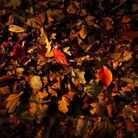 2018年11月10日(土)15:30−18:00「第二部 ストロボで変わる風景写真(実践)」 講師:閃光フォトグラファー 小山光弘