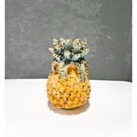 Fruits  Pot  Pineapple