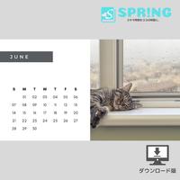 にゃんこ♡カレンダー (2020年6月 )