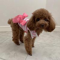 ストライプ リボンシャツ ピンク