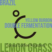 【レモングラスのようなハーブ感!?】ブラジル イエローブルボン・ダブルファーメンテーション 100g
