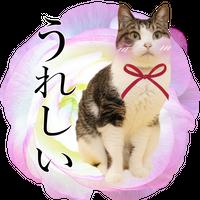 p014*LINEスタンプ・プレミアム【おめかしCAT】画像8枚 -ペット