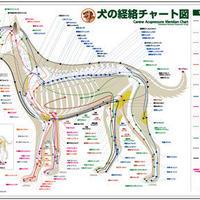 セット/犬と猫の経絡(ツボ)チャート図PPポスター2枚
