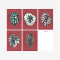 BIENVENUE STUDIOS〈SMALL PRINT COLLECTION_LEAVES OF FRIENDSHIP〉(5PCS)