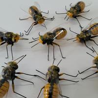 昆虫模型:蜂 8匹セット
