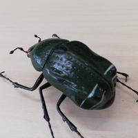昆虫模型:カナブン