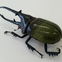 昆虫模型:ヘラクレスオオカブト(緑色)
