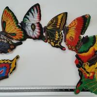 昆虫模型:蝶々 5頭セット アソート