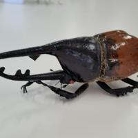 昆虫模型:ヘラクレスオオカブト(茶色)