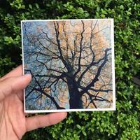 小林英治|TREES