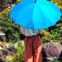 サクラ骨 傘専門店  通販  東京  雨傘  ワンタッチ  ジャンプ  グラスファイバー  サビない  旅傘  【一枚張り 60㎝ ターコイズ】