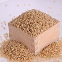 丹波篠山のこしひかり 特別栽培米 玄米 5㎏