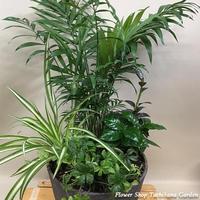 観葉植物の寄せ植え (YO-02)