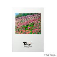 【原田泰治】A4クリアファイル【モモの花】