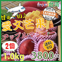 [出荷6月下旬〜7月上旬]台湾産 愛文芒果(アップルマンゴー)1.0kg(2玉)★送料無料