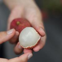 国産生ライチ「太陽の真珠」2個入10パック