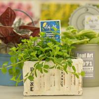 【安城市民限定ドライブスルー販売】安城市 観葉植物セット (※こちらの商品は配送サービスを行っておりません。)