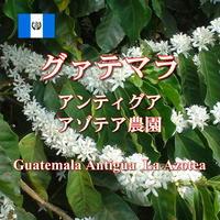 グァテマラ アンティグア アゾテア農園   中深煎り 100g