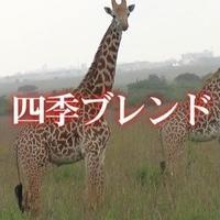 四季ブレンド・夏 100g