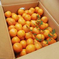 機能性表示食品 届出番号D-214 瀧本農園温州みかん 5kg