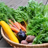nekko farmの旬のお野菜BOX